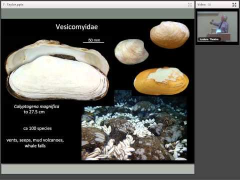 John Taylor: Chemosymbiotic Bivalves from the Intertidal to