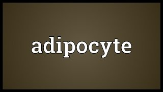 Adipocyte Meaning
