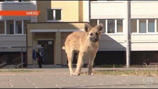 Бездомные собаки держат в страхе жителей Каменца