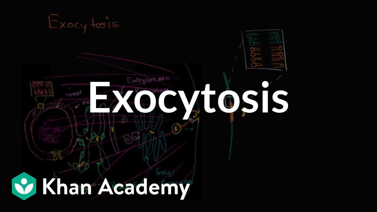 exocytosis video bulk transport khan academy