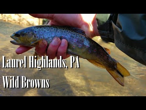 WBD -  Fly Fishing Laurel Highlands, PA  Wild Browns  Euro Nymphing/Tightlining
