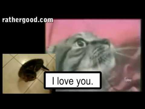 Söz, müzik : Kedi(ler) :))