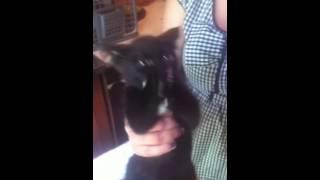 Дьявольский кот и огурец