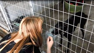 Video The dog that no one would adopt - Sofi's story download MP3, 3GP, MP4, WEBM, AVI, FLV Agustus 2017