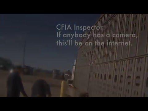 Farming Simulator ANIMAL Live Transport Abuse Crossing Vegan Slaughter Bacon Meat Made Pay Forward