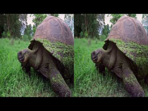 VR Movies 3D HD | Galapagos Islands film sbs | Virtual Reality Experience (VR Video) 2017