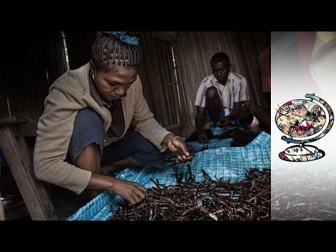 Madagascan Vanilla Trade Controlled By Chinese Businesses