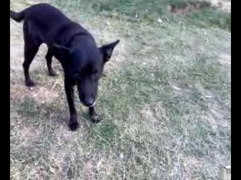 Sai Ashram Dog Shelter
