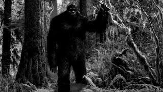 Страшные истории из жизни Кошмары леса