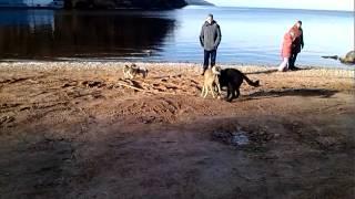 собачья драка(и это мама и папа?!, 2013-12-25T13:27:50.000Z)
