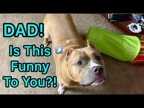 My Dog Cute Moments Compilation