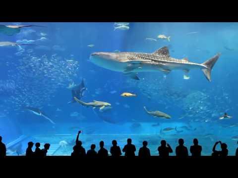 Çocuklar için Akvaryum Video , Akvaryum, Çocuklar için , Rahatlatıcı Balık videosu