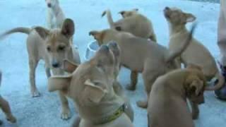 屋久島犬 http://yakuken.com.