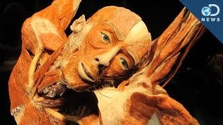 Body Worlds: Donating Your Body to Science