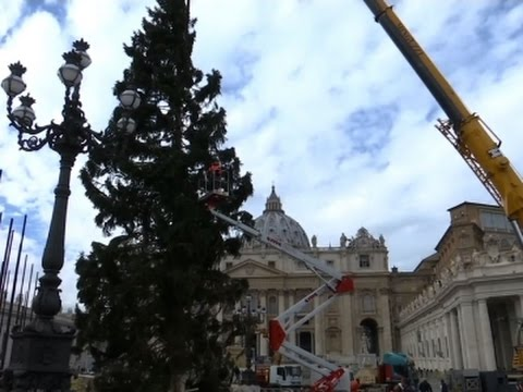 Raw: Christmas Tree Put Up in St. Peter's Square