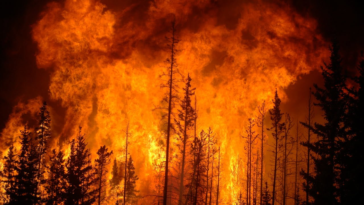 what are most wildfires caused by
