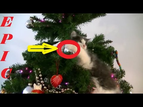 Hilarious Video Cat Ruining Christmas, Breaking Ornaments ...