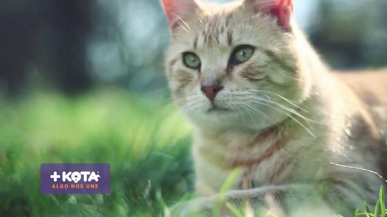 +KOTA: Alimentación para gatos