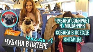 Чубака в Питере (ч.1) / Собака в поезде / Китайцы / Chubaka Vlog!