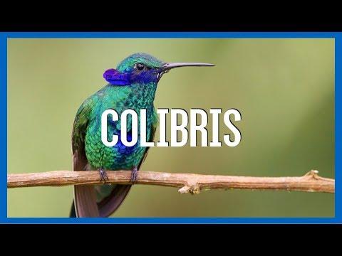 Colibri - IRL
