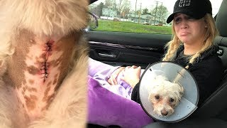 Our Baby Bella Had To Get Surgery! 😥
