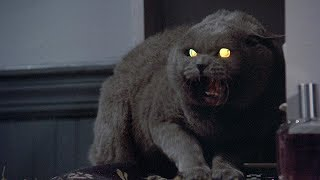 Pet Sematary Remake Starts Filming