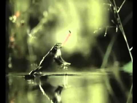 Frosch Fliege