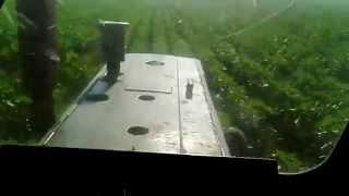 ЮМЗ-6 турбо окучивание подсолнуха / JUMZ- 6 turbo earthing up of sunflower