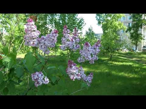 Андрей Обидин - Свечи нежные сирени