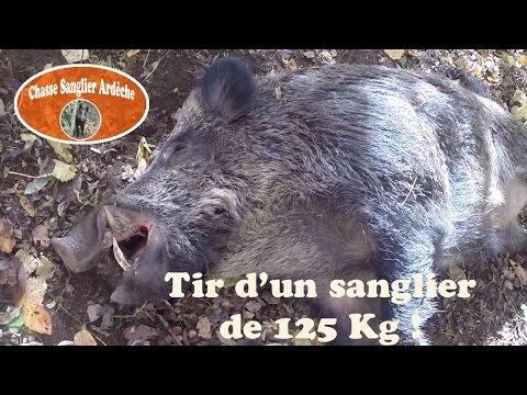 Chasse Du Sanglier En Ardèche 2015-2016 - 04 - Tir D'un Très Gros Sanglier (125Kg)