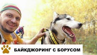 Ездовые собаки: видео как собака тянет велосипед