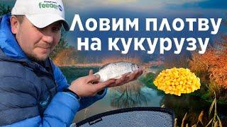 Буксир испортил всю рыбалку на Десне Ловлю плотву на резаную КУКУРУЗУ