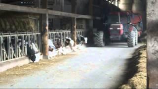 Le quotidien de la ferme ...