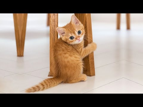 ♥Cute Cats and Kittens Doing Funny Things 2018♥ #3 - Funny Cat compilation