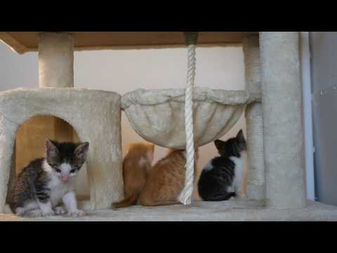kittens wake up 4k UHD 🐈 🐱