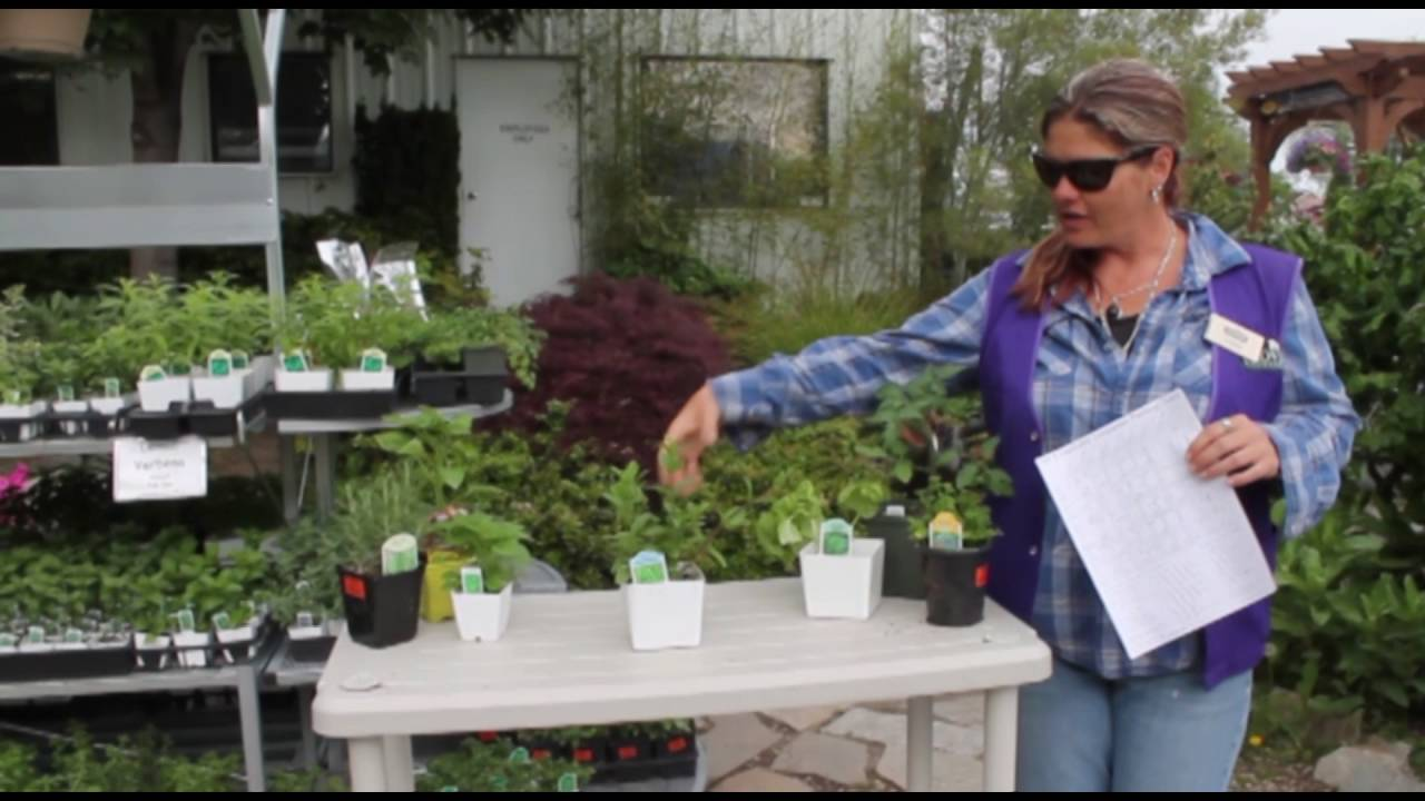 Companion Planting Tips From Glover Nursery