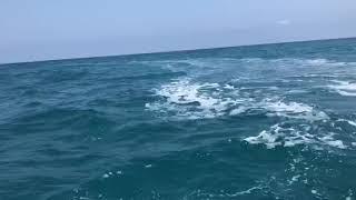 Banco di delfini al largo della costa di Termoli