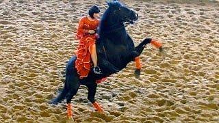Испанский танец. Красивые лошади видео. Испанский танец верхом на лошади(Автор: Александра Лихачёва. http://positivecreativ.ru Испанский танец. Красивые лошади видео. Испанский танец верхом..., 2015-04-06T13:24:57.000Z)