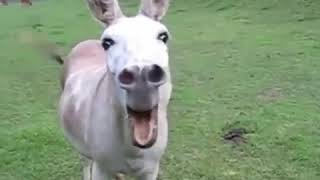 Madlipz malvi video dubbing donkey animal
