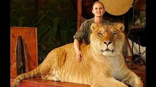 Largest and Most DANGEROUS Big Cats