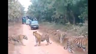 Wildlife Safari in Rishikesh Uttarakhand India / Krishna Holidays