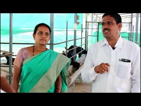 Anirudha Sirs Pure Osmanabadi Goat Farm Part 2 नवीन शेळ्या विकत घेताना कुटून घ्याव्यात