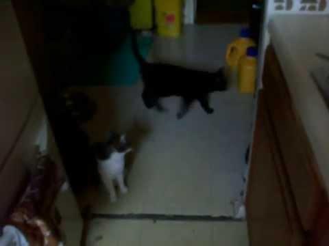 CATS Cute Love VEGAN Tofu Meats (ASPCA HSUS PETA) Shelter Recuse Dog Animals Baby Pet Selfie