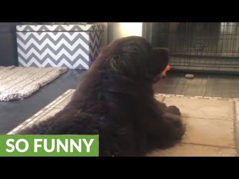 Little girl nurses burrs out of dog's fur