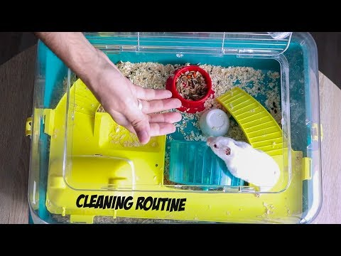 Hamster cleaning routine