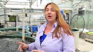 Closed Environment Agriculture Greenhouse Tour