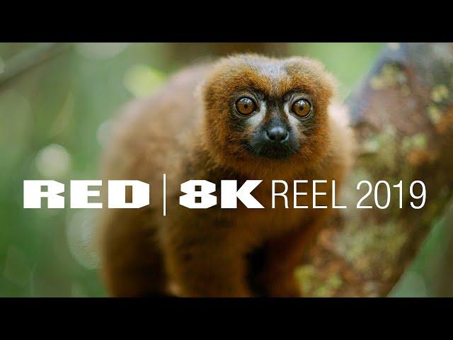 RESOLUTION MATTERS | 8K REEL | Shot on RED