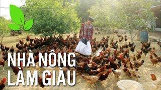 Kiếm gần nửa tỷ mỗi năm nhờ cách nuôi gà độc đáo