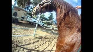 Video Horse Abuse download MP3, 3GP, MP4, WEBM, AVI, FLV Juli 2018