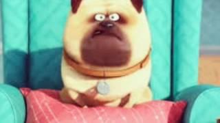 Кино тайна жызьни домашних животных